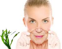 Anti-Age Seaweed Facial Creams and Treatments