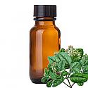 Andes Organics Pure Boldo Oil, 125 ml